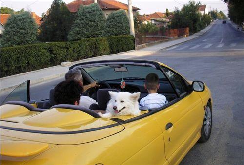 Sipas situatës së treguar në fotografi, shoferi i veturës nuk guxon ta bartë fëmijën më të vogël se 12 vjeç në ulësen e parë dhe: